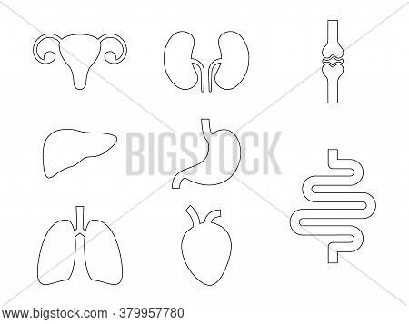 Set Of Internal Organs Line Icons. Human Simple Organs Black Shapes Outline Collection Vector Illust