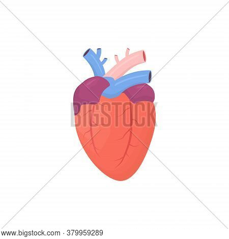 Heart Icon. Human Color Heart Shape In Flat Style Vector Illustration Isolated On White Background.