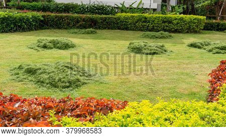 Progressing Maintenance The Green Grass Lawn In A Garden, Heap Of Turf Was Cutted On The Middle Lawn