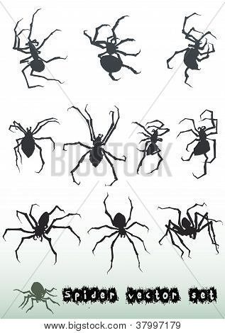 Spider Vector Set