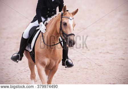An Elegant Light Beautiful Horse In Sports Equipment With A Rider In The Saddle Gracefully Strides A