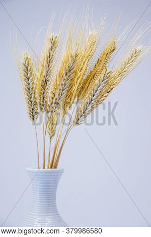 Yellow Ears Of Rye In A White Vase. Vase With A Bouquet Of Rye Ears On A White Background.