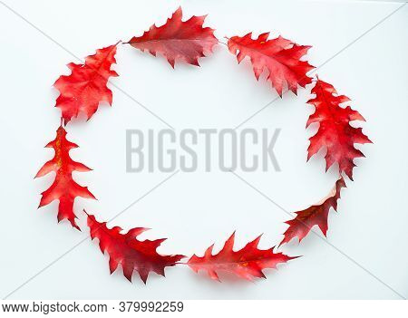 Oval Frame Made From Vibrant Red Oak Leaves, Flat Lay On White Background. Abstract Autumn Wreath