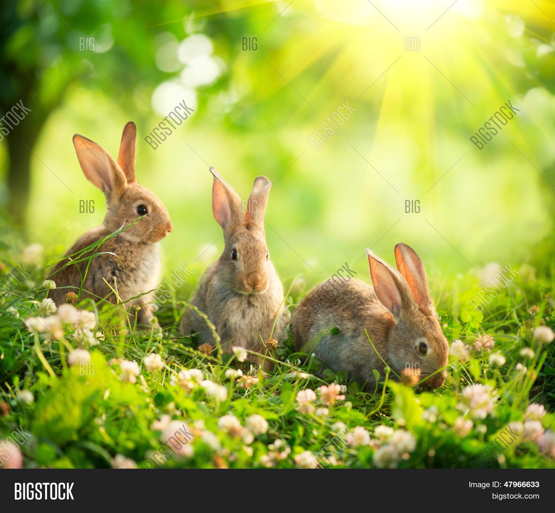 Image et photo de lapins beaut essai gratuit bigstock - Photo de lapin mignon ...