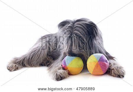 Pyrenean Sheepdog Ans Toys