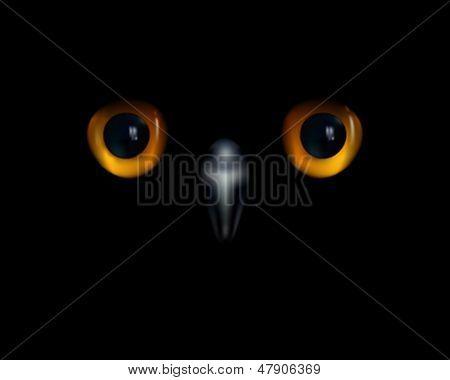 Baby owl. Yellow eyes and beak on black background.