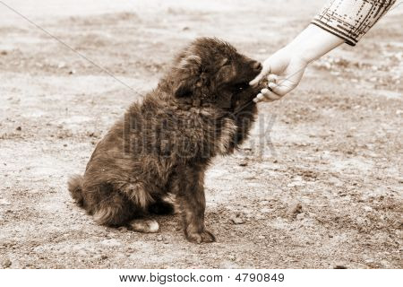 lonely homeless dog and helping human hand poster