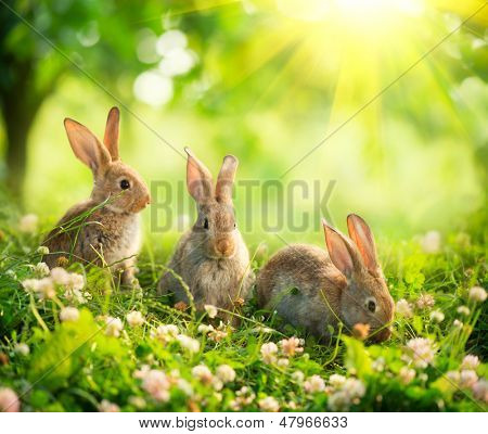 Rabbits. Beauty Art Design of Cute Little Easter Bunny in the Meadow. Spring Flowers and Green Grass. Sunbeams