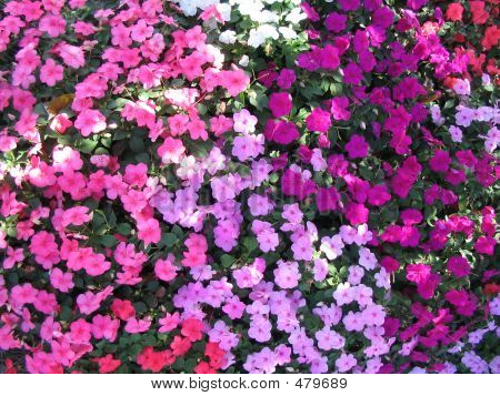 Flowers Pink Purple Red