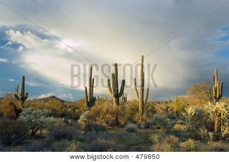 Monsoon Clouds Over Desert