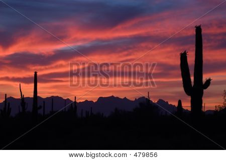 Brilliant Sunset And Saguaro