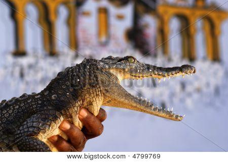 Yong Crocodile