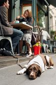 Blurred young couple at cafe with dog resting on sidewalk poster