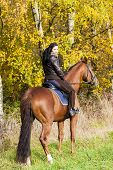 equestrian on horseback in autumnal nature poster