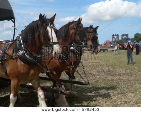 A trio of work horses