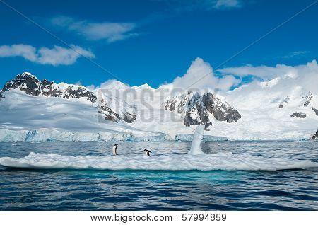 Gentoo Penguins On Iceberg Antarctica