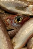 Details of fish close-up.Eyes glassy and empty. poster