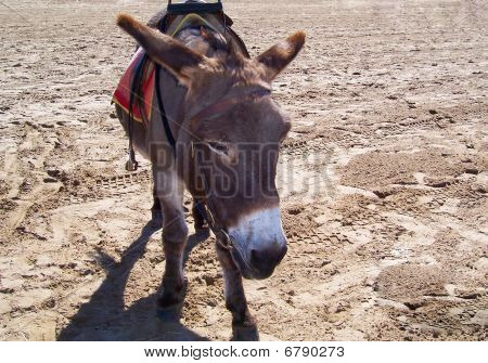 A Lonely Donkey On A Beach