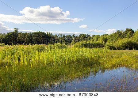 Wetland in the Finley National Wildlife Refuge Willamette Valley Oregon poster
