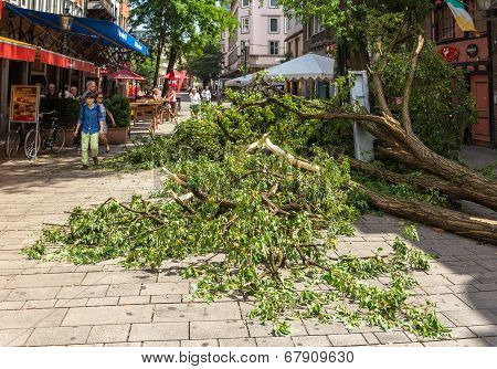 Dusseldorf, Germany - June 10: Uprooted Tree In The City Center On June 10, 2014 In Dusseldorf, Germ