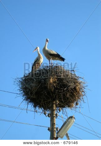 Two storks in the nest. Back home at Spring poster