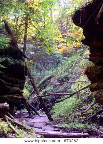 Prehistoric Path