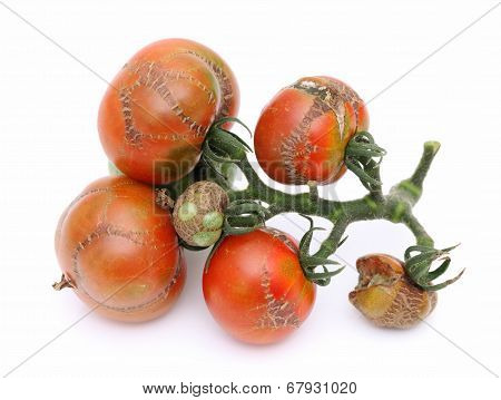 illness tomato