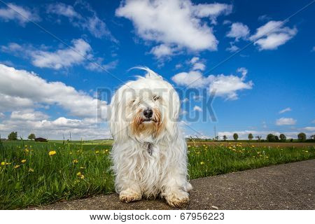 Dog In The Countryside