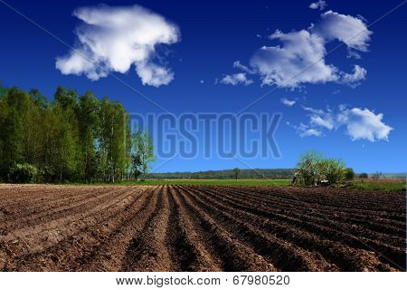 Landscape, Agriculture, Farmland In The Country