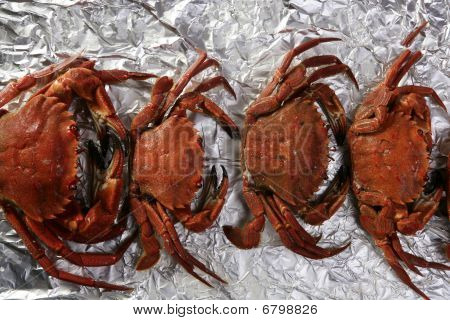 Lio carcinus puber crabs row over silver paper poster