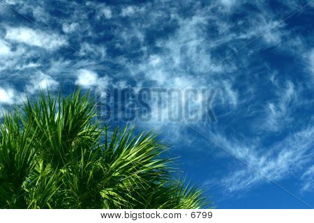 Clouds & Palm
