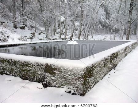 Winter Scene In The Forest