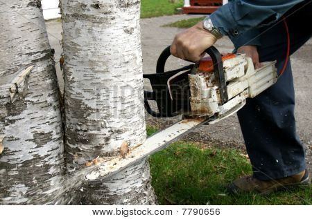 Man Cutting Down Trees