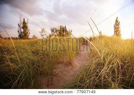 Beach path through the dunes