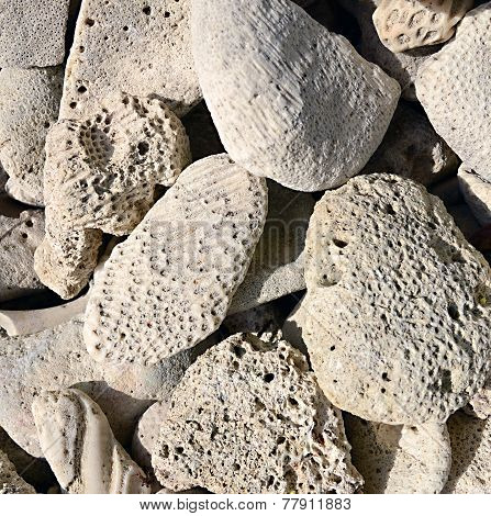 Limestone rocks containing fossils, on a Caribbean beach