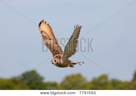 Beautiful Owl Flying Against Blue Sky
