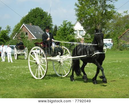 Single Frisian driving horse in dogcart