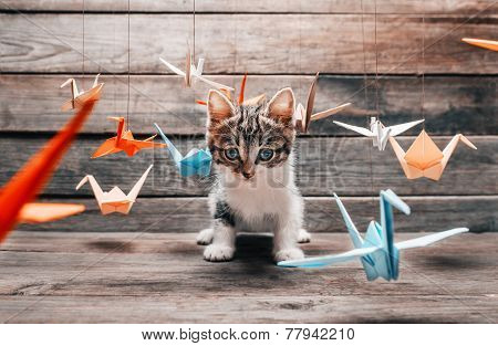 Cute Kitten Sitting Among Paper Origami Cranes