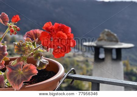 geranium of Capileira in La Alpujarra Granada spain
