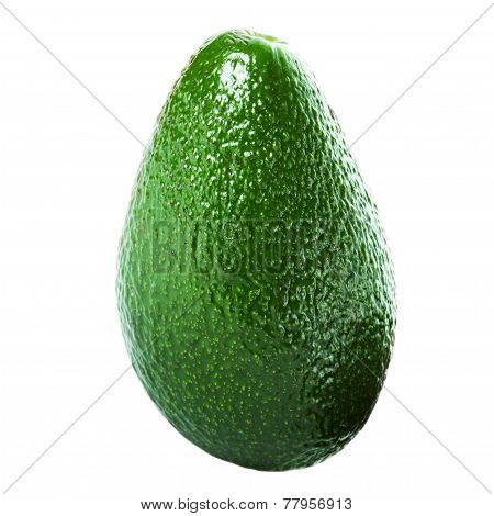 Whole Avocado Isolated On White Background. Fresh Green Avocado Fruit Macro