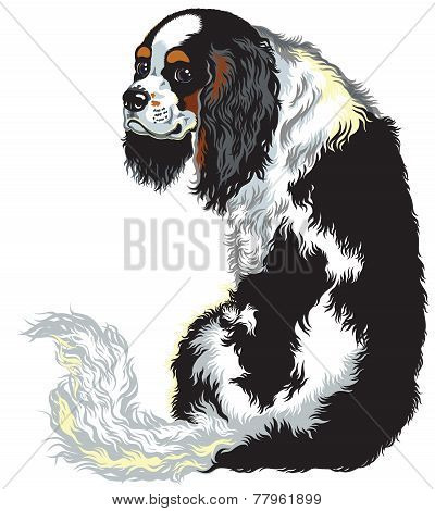 tricolor cavalier king charles spaniel