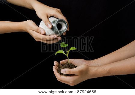 woman hands pouring water on sapling