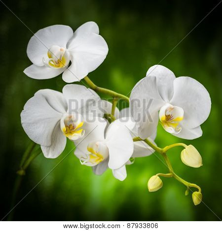 white orchid on the green