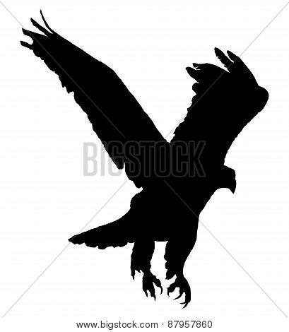 Golden eagle flying. Black silhouette on white.