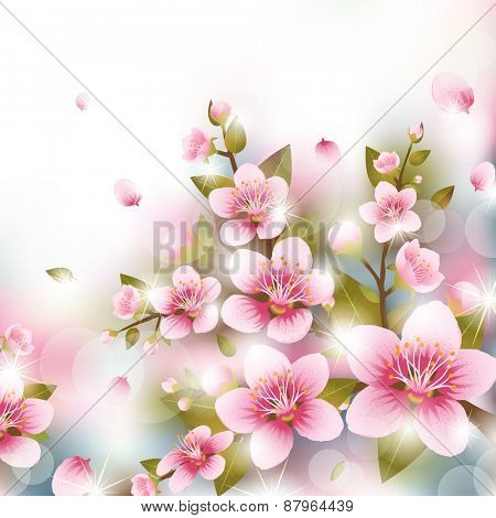Branches of Cherry Blossoms in front of Blurred Background