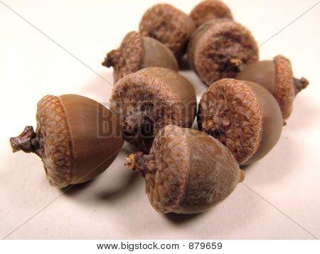 Acorns Overwhite