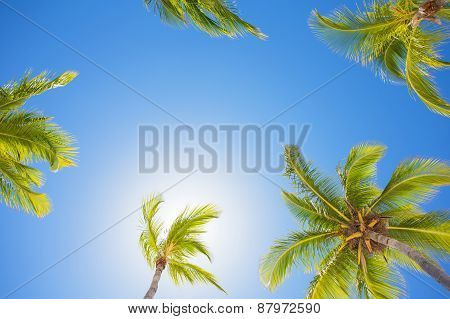 Palm trees on bright summer day against clear blue sky