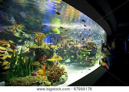 Ripleys Aquarium - Coral reef aquarium