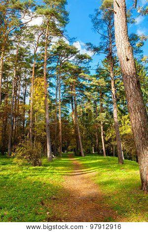 Path in Oru Park. Toila Ida-Viru County Estonia Europe poster