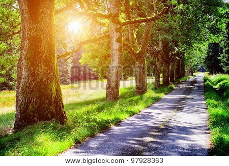 Alley of tree